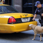 Reliability of Police Drug Dogs